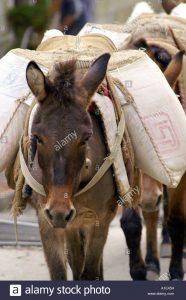 donkey-carrying-sacks